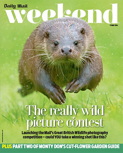 Daily-mail--Great-British-Wildlife-Competition-cover